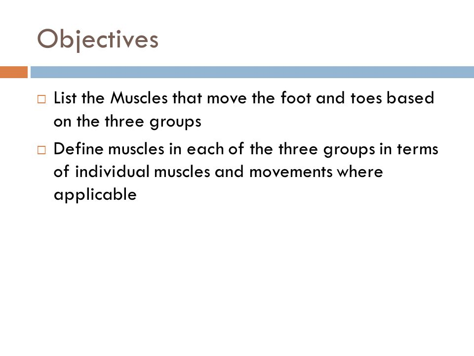 Objectives List the Muscles that move the foot and toes based on the three groups.
