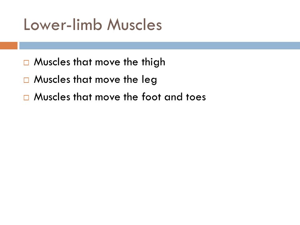 Lower-limb Muscles Muscles that move the thigh