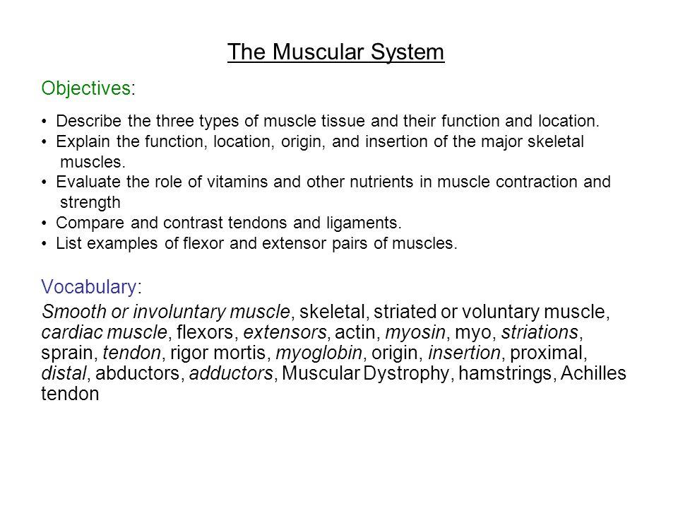 The Muscular System Objectives: Vocabulary: