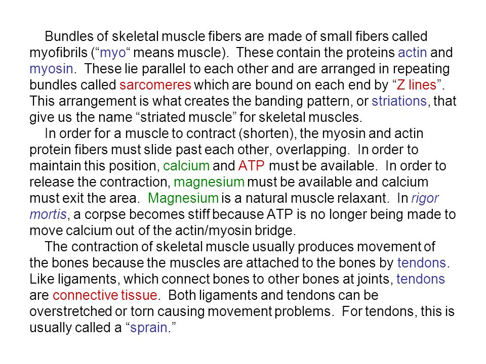 Bundles of skeletal muscle fibers are made of small fibers called