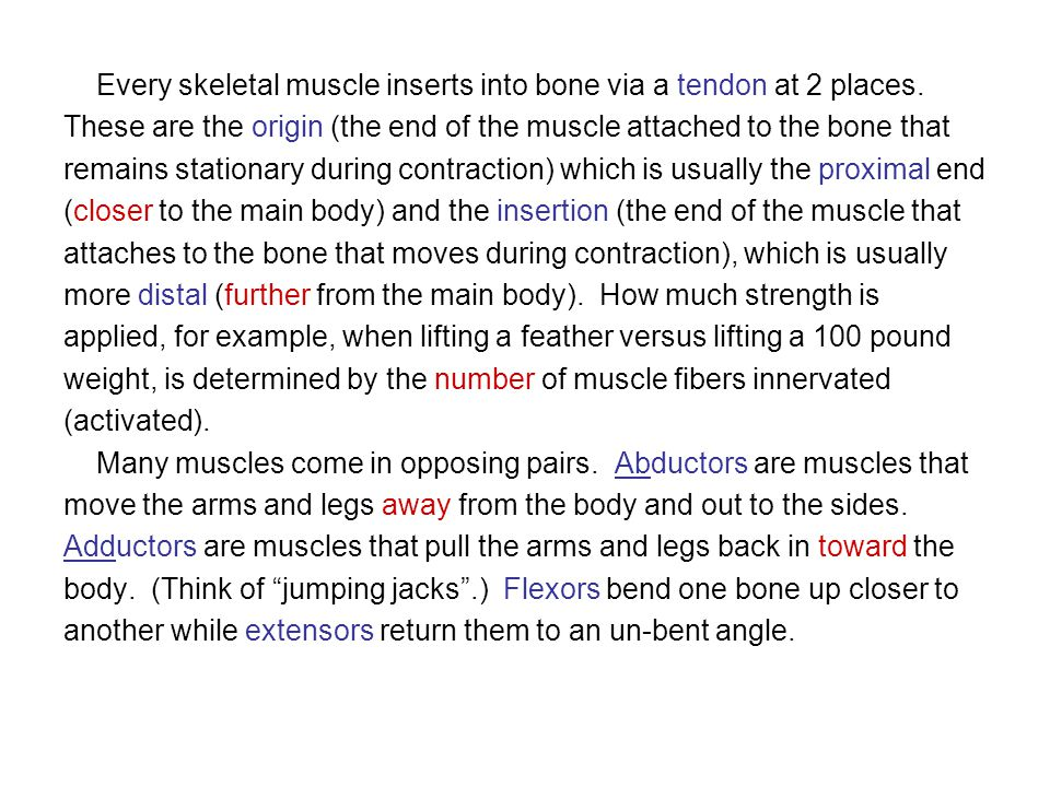 Every skeletal muscle inserts into bone via a tendon at 2 places.