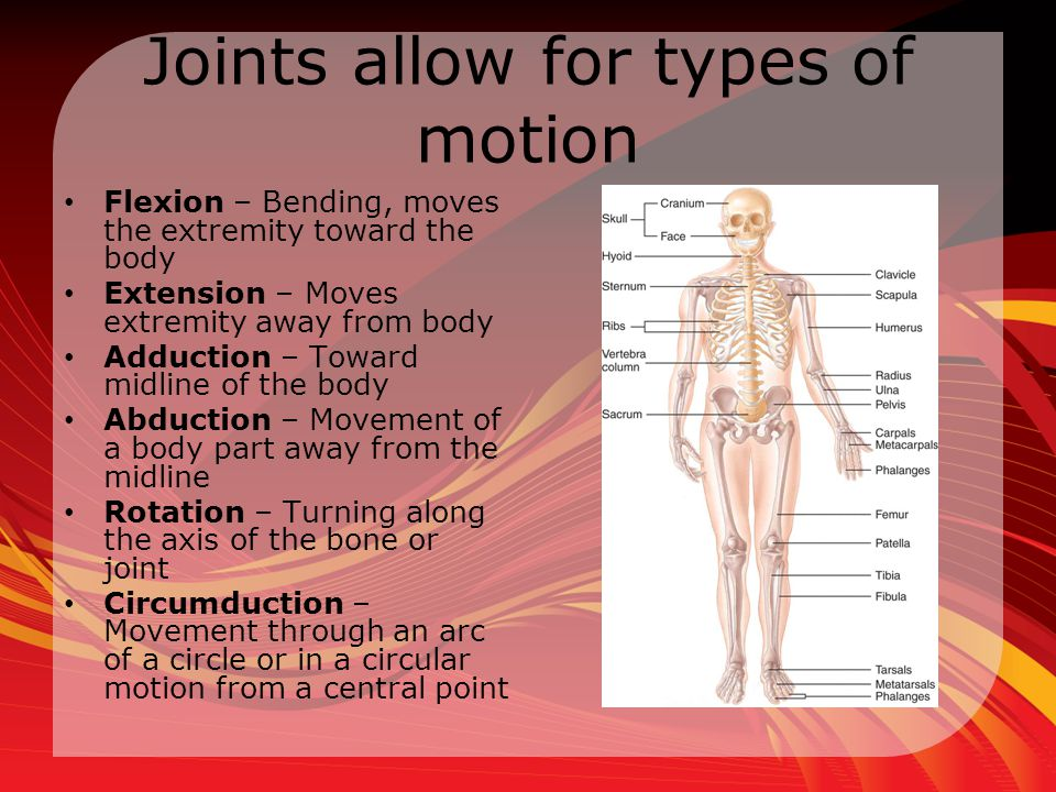 Joints allow for types of motion
