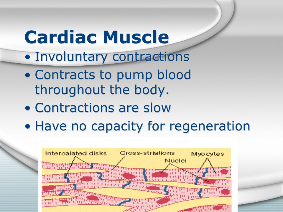 Cardiac Muscle Involuntary contractions