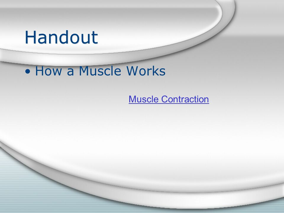 Handout How a Muscle Works Muscle Contraction