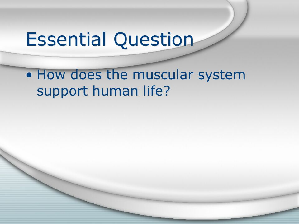 Essential Question How does the muscular system support human life