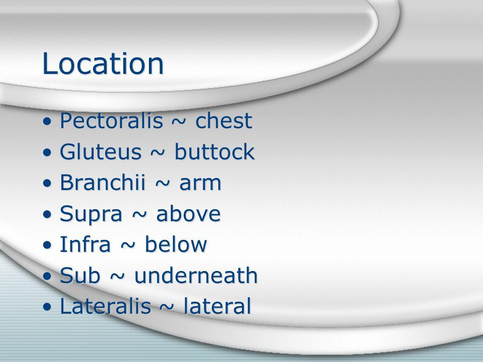 Location Pectoralis ~ chest Gluteus ~ buttock Branchii ~ arm