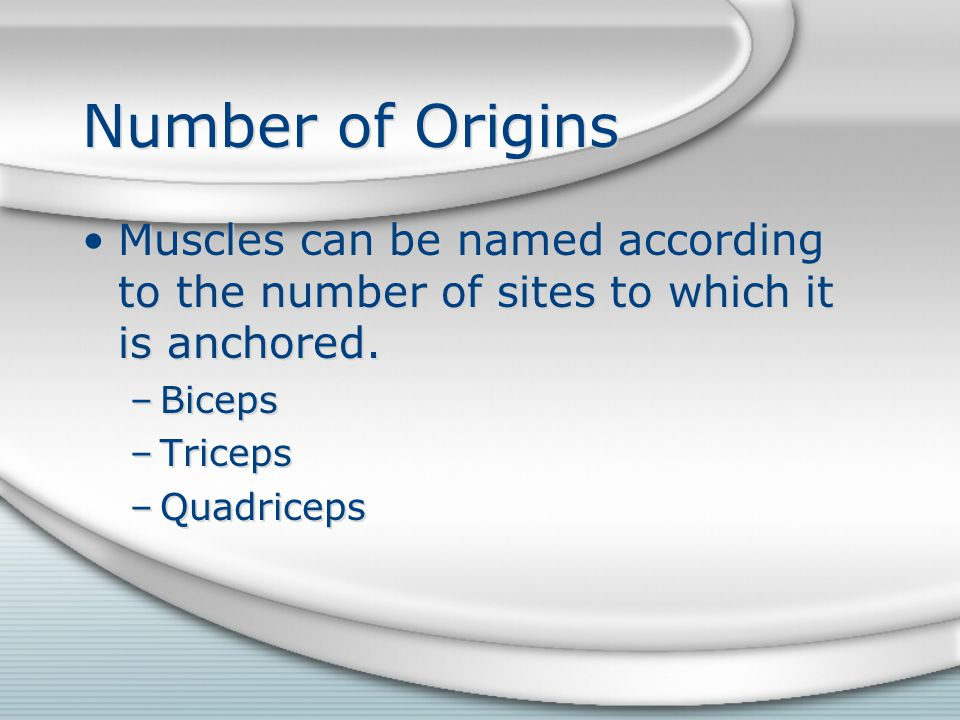 Number of Origins Muscles can be named according to the number of sites to which it is anchored. Biceps.