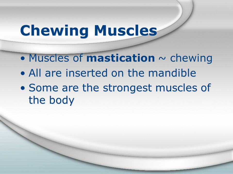 Chewing Muscles Muscles of mastication ~ chewing