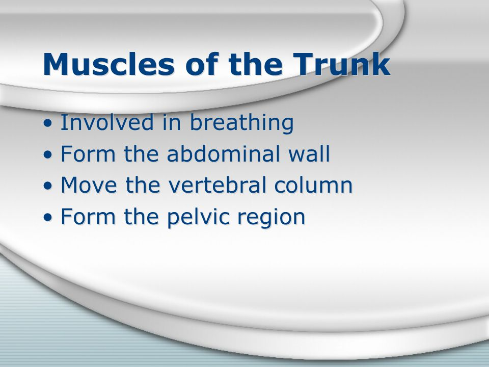 Muscles of the Trunk Involved in breathing Form the abdominal wall