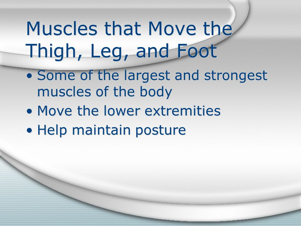 Muscles that Move the Thigh, Leg, and Foot