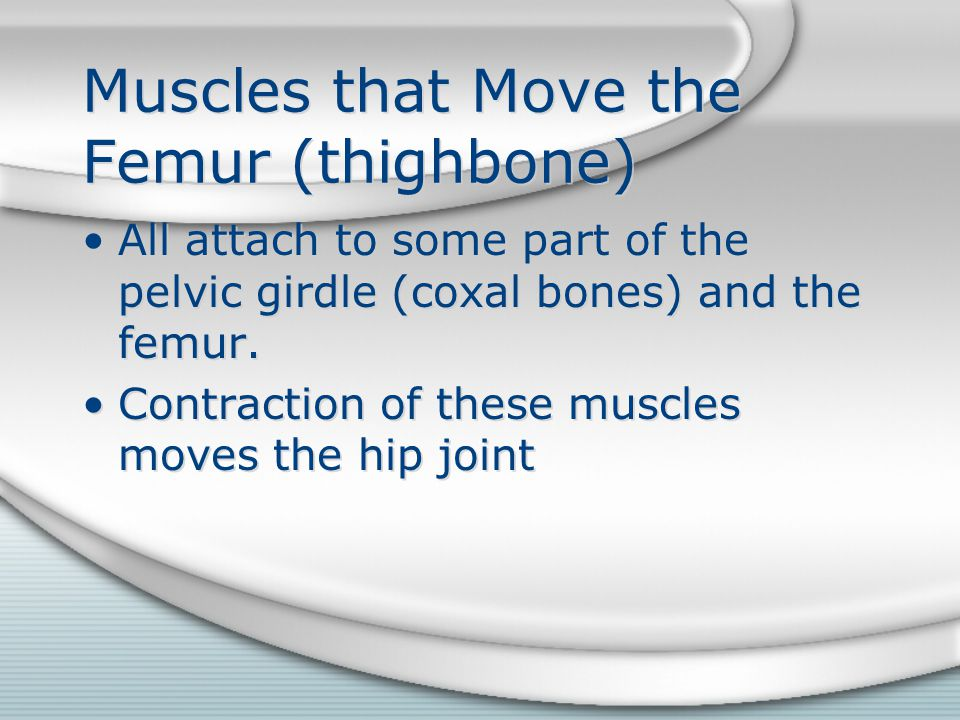 Muscles that Move the Femur (thighbone)