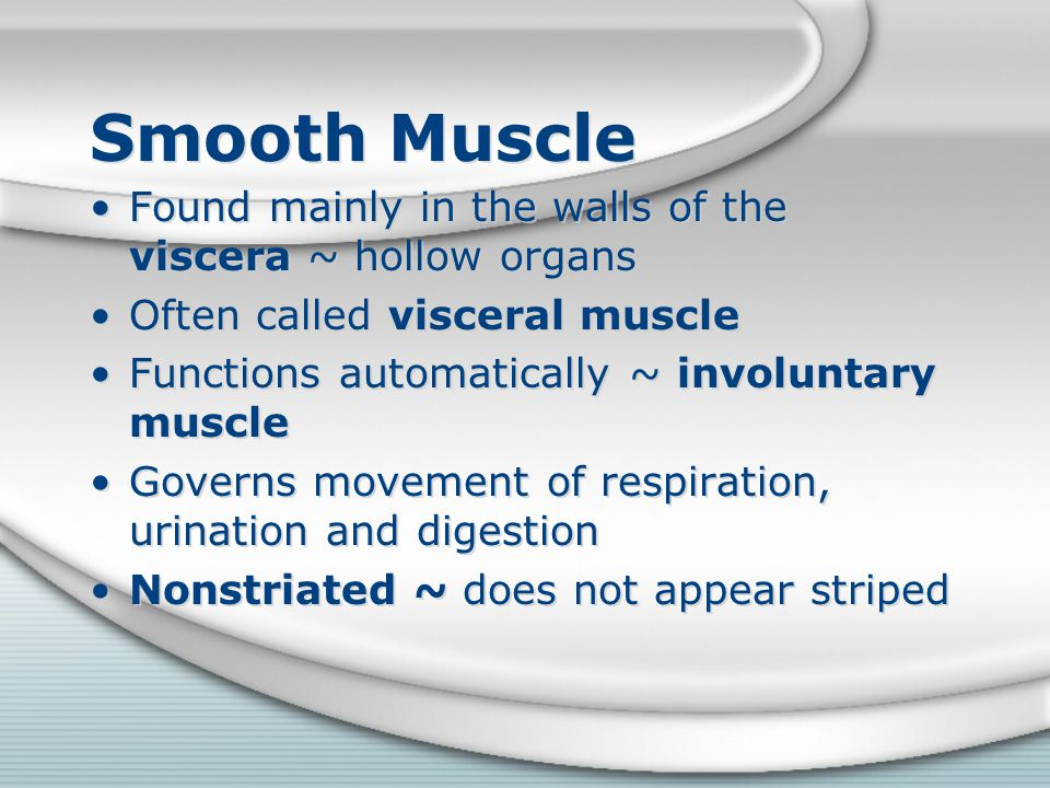 Smooth Muscle Found mainly in the walls of the viscera ~ hollow organs