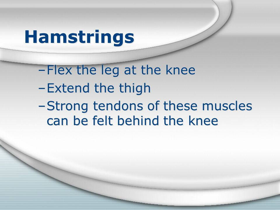 Hamstrings Flex the leg at the knee Extend the thigh