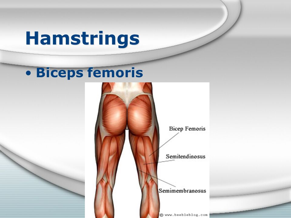 Hamstrings Biceps femoris
