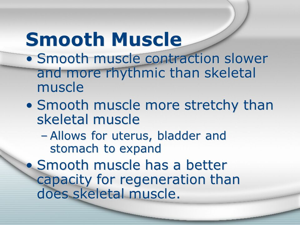 Smooth Muscle Smooth muscle contraction slower and more rhythmic than skeletal muscle. Smooth muscle more stretchy than skeletal muscle.