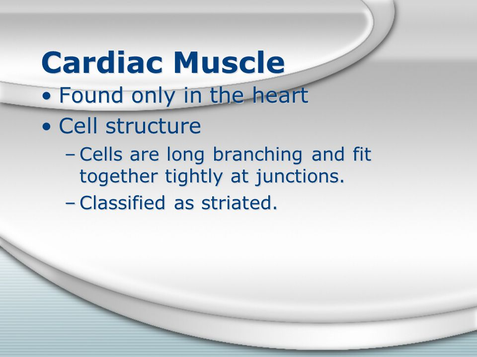 Cardiac Muscle Found only in the heart Cell structure