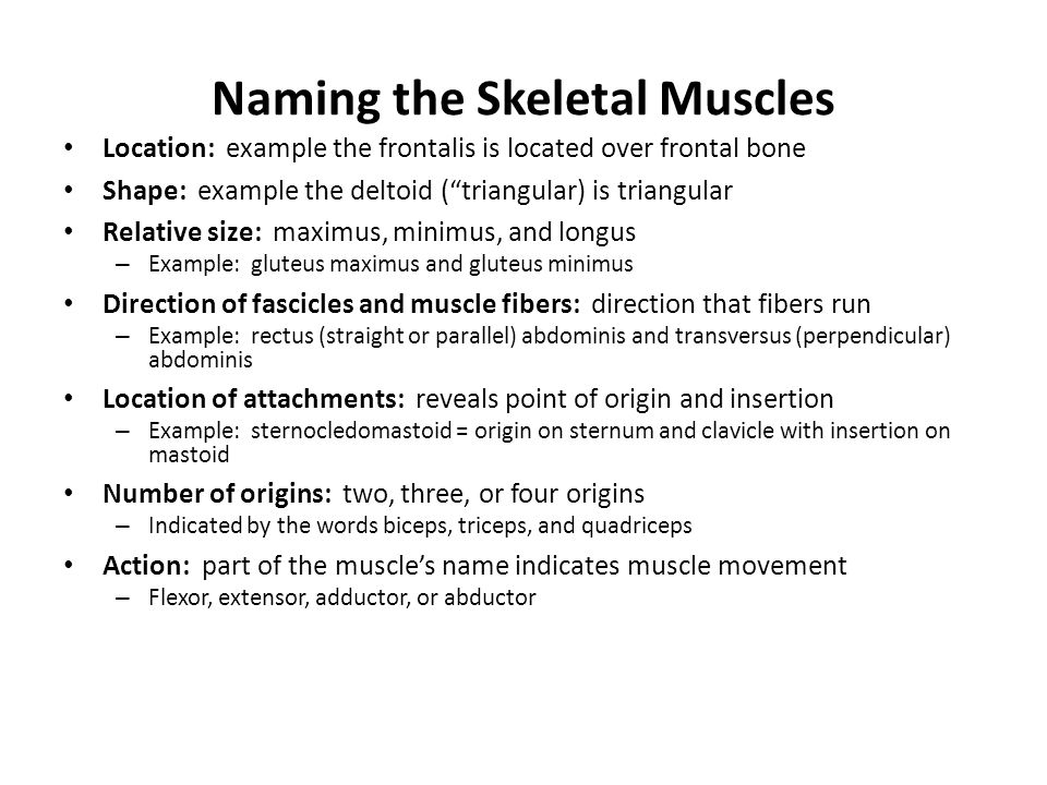 Naming the Skeletal Muscles