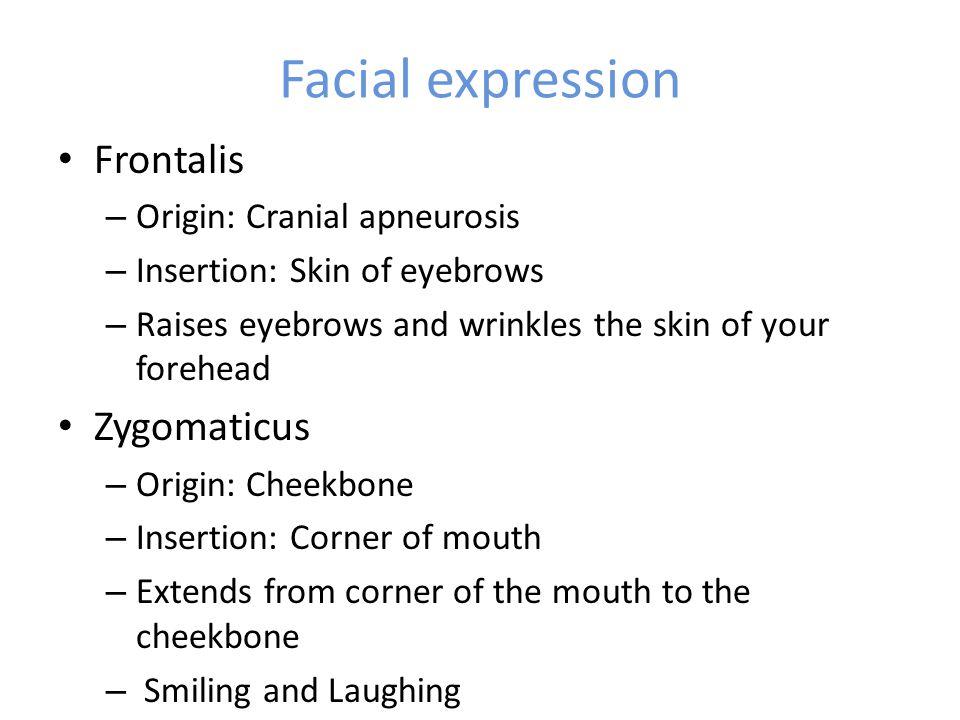 Facial expression Frontalis Zygomaticus Origin: Cranial apneurosis