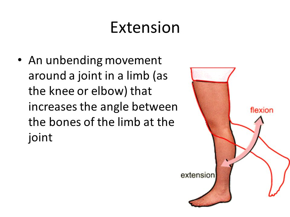 Extension An unbending movement around a joint in a limb (as the knee or elbow) that increases the angle between the bones of the limb at the joint.