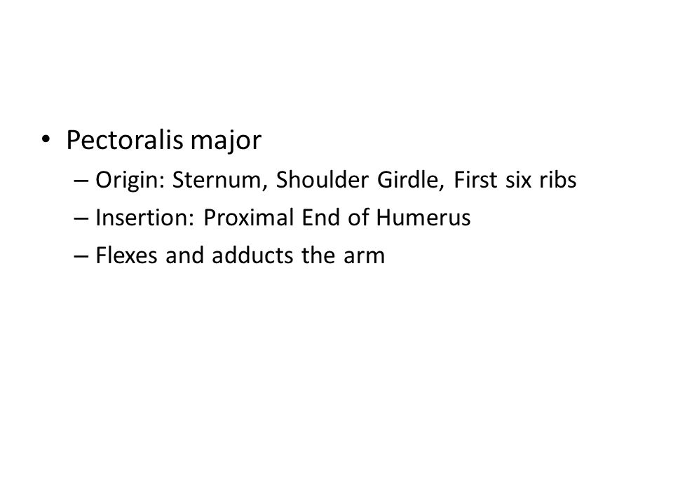 Pectoralis major Origin: Sternum, Shoulder Girdle, First six ribs