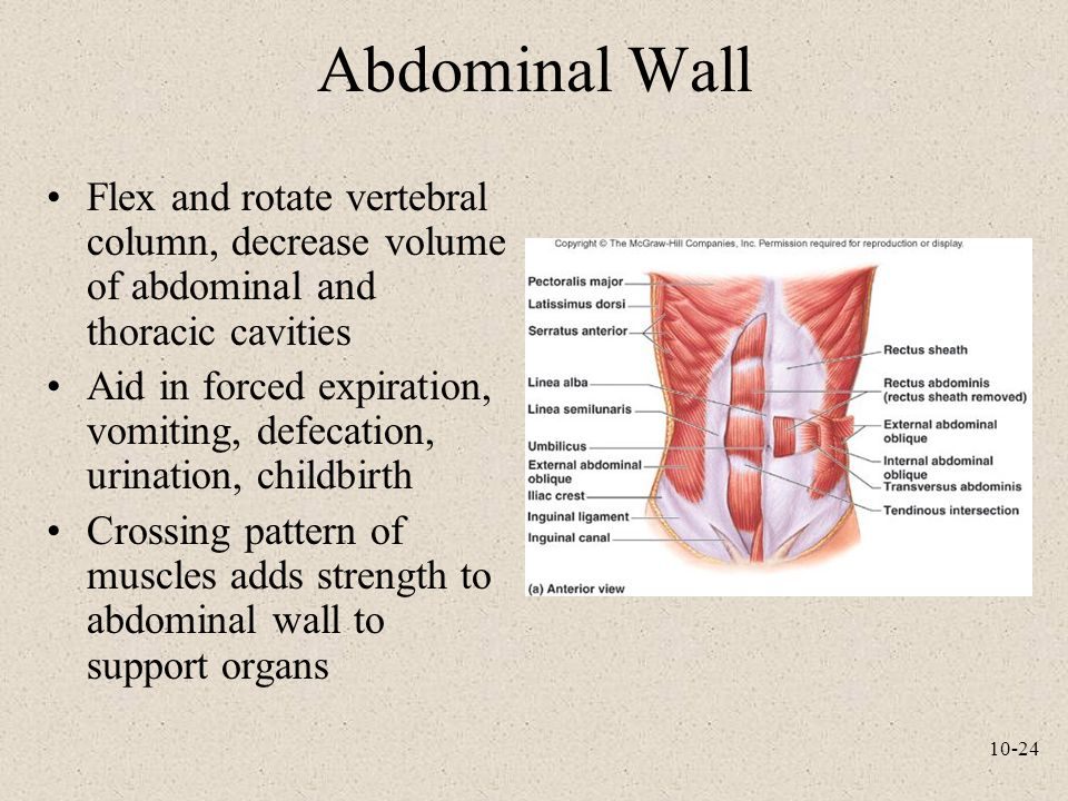 Abdominal Wall Flex and rotate vertebral column, decrease volume of abdominal and thoracic cavities.