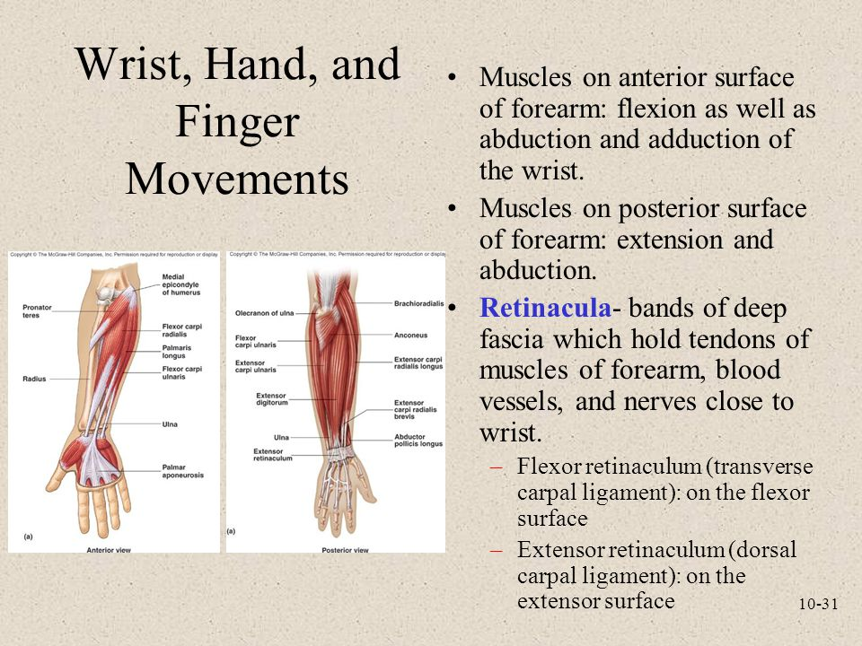 Wrist, Hand, and Finger Movements