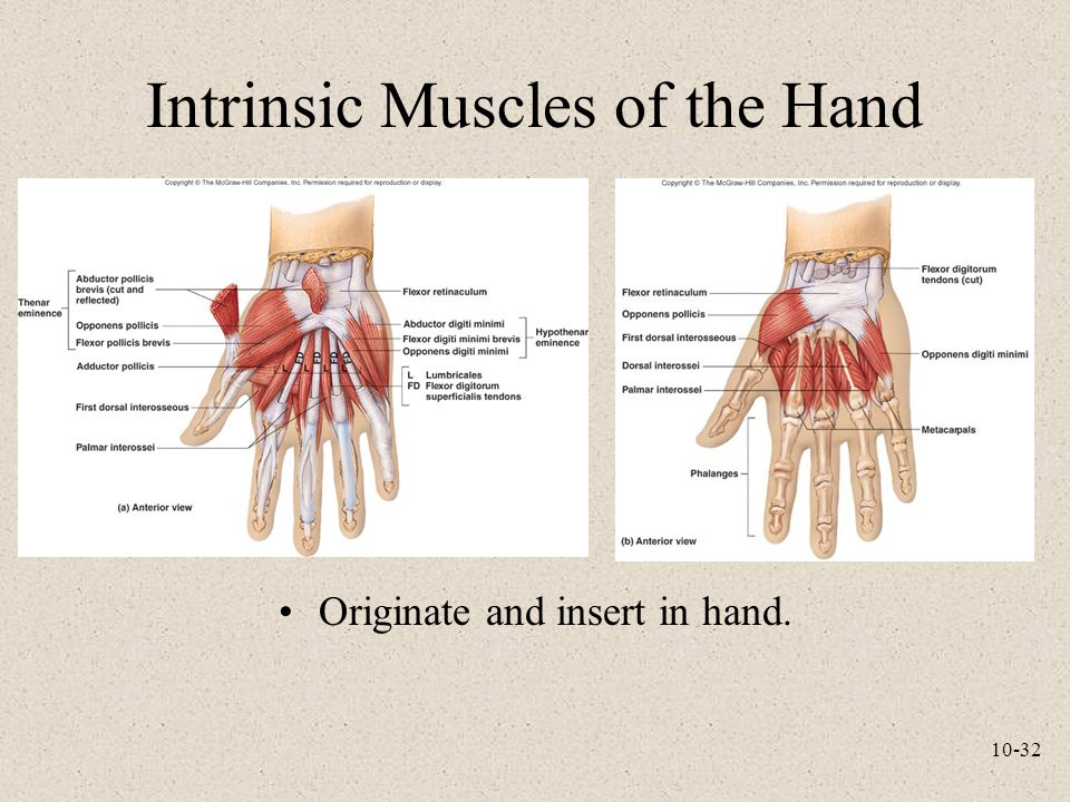 Intrinsic and extrinsic muscles of the hand