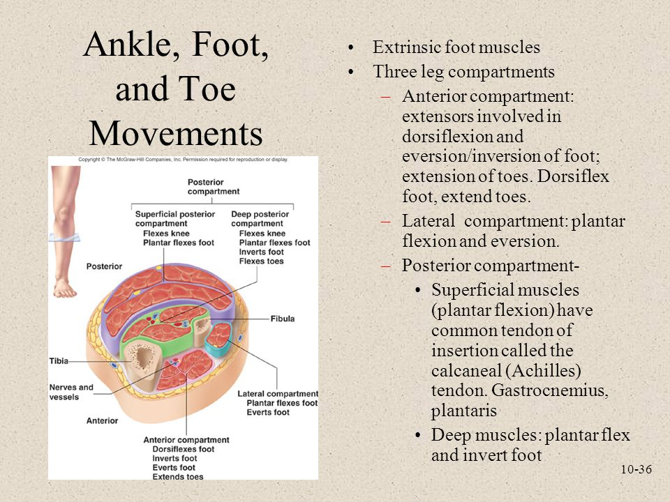 Ankle, Foot, and Toe Movements