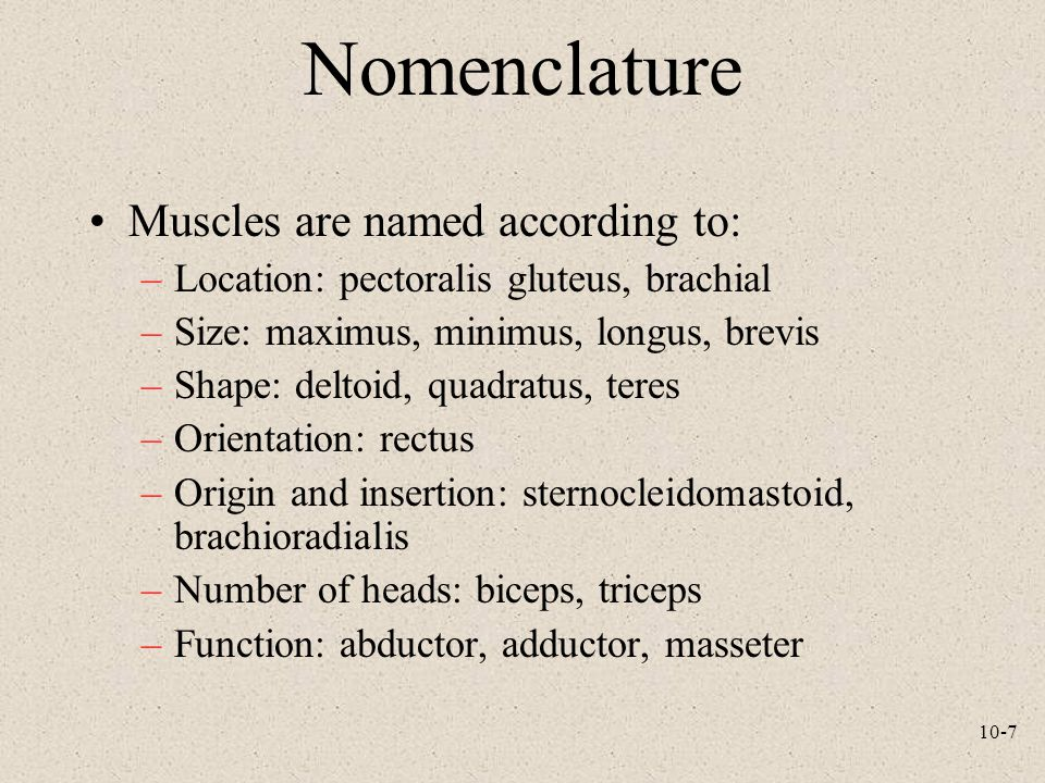 Nomenclature Muscles are named according to: