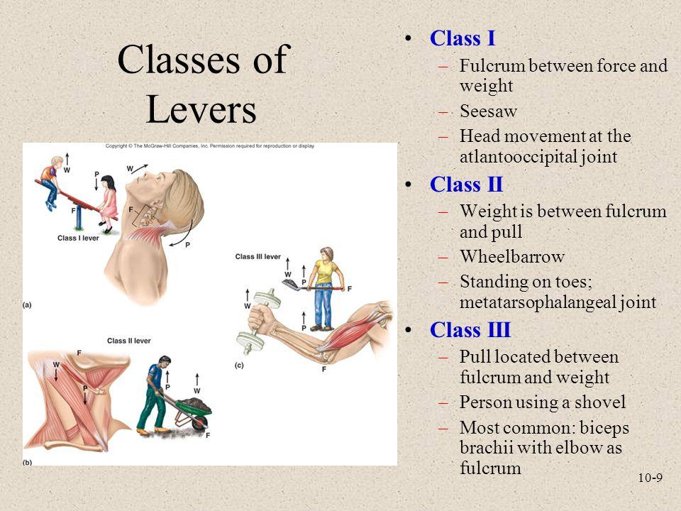 Classes of Levers Class I Class II Class III