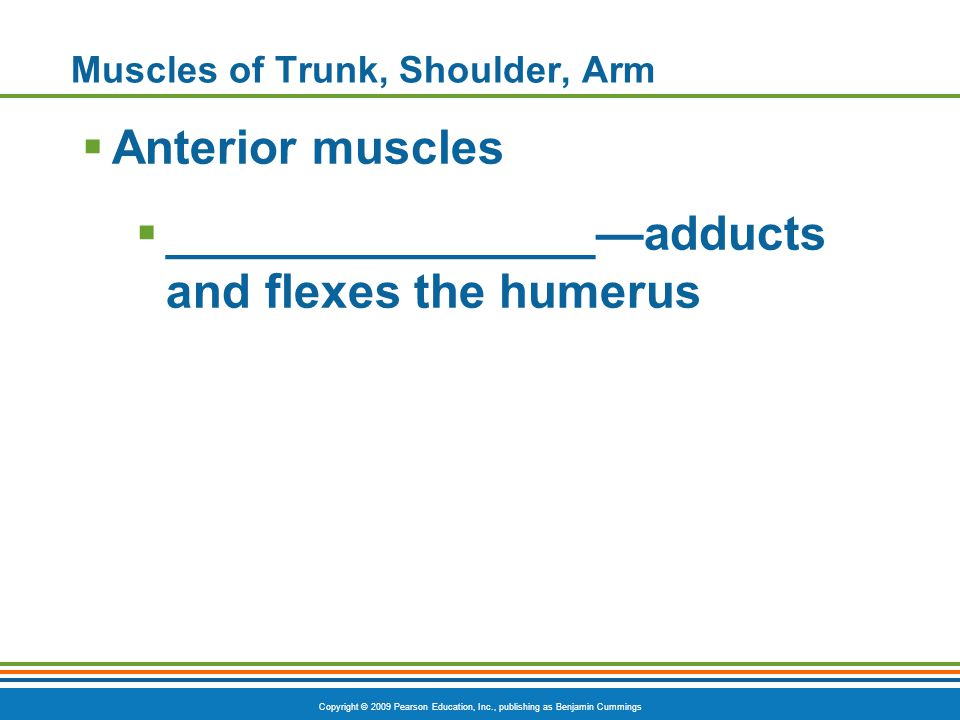 Muscles of Trunk, Shoulder, Arm