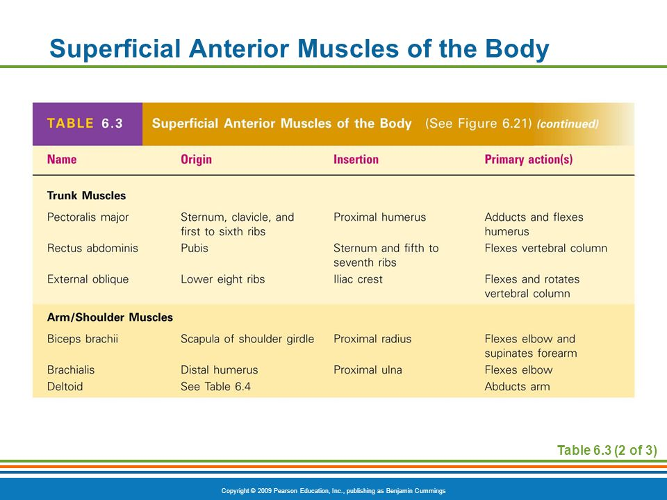 Superficial Anterior Muscles of the Body