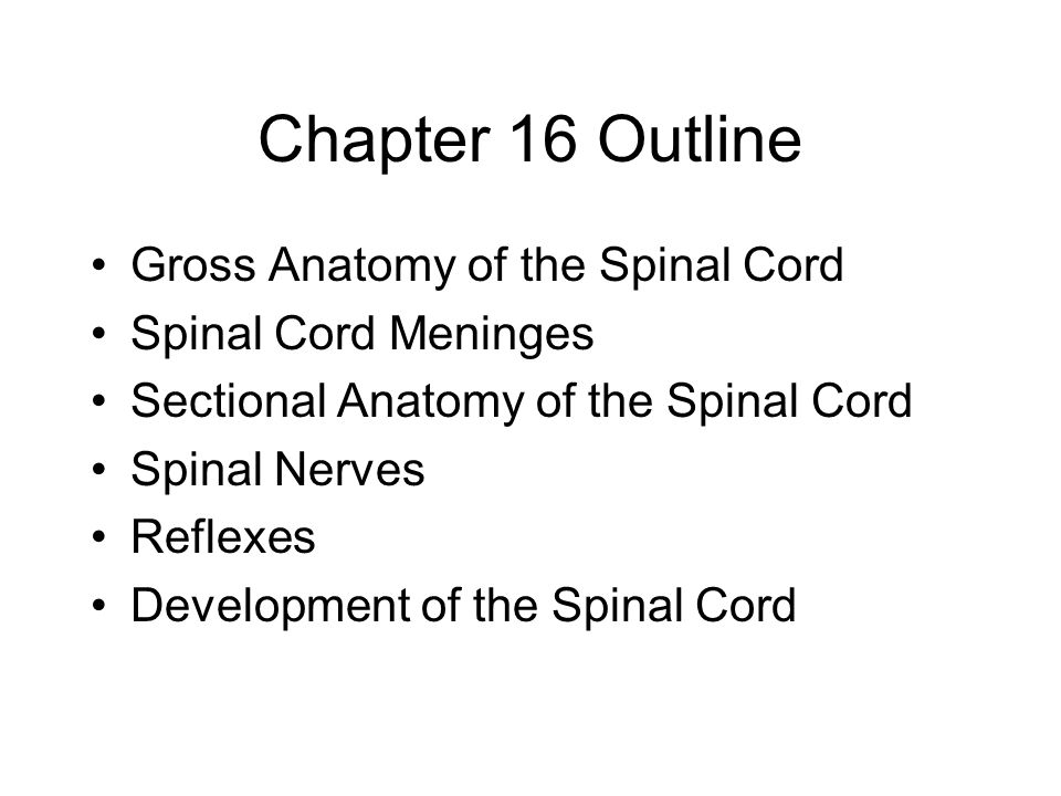 Chapter 16 Outline Gross Anatomy of the Spinal Cord