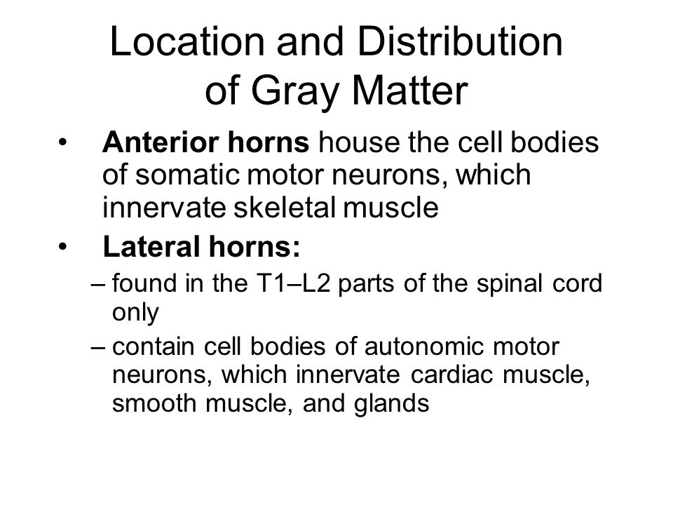Location and Distribution of Gray Matter