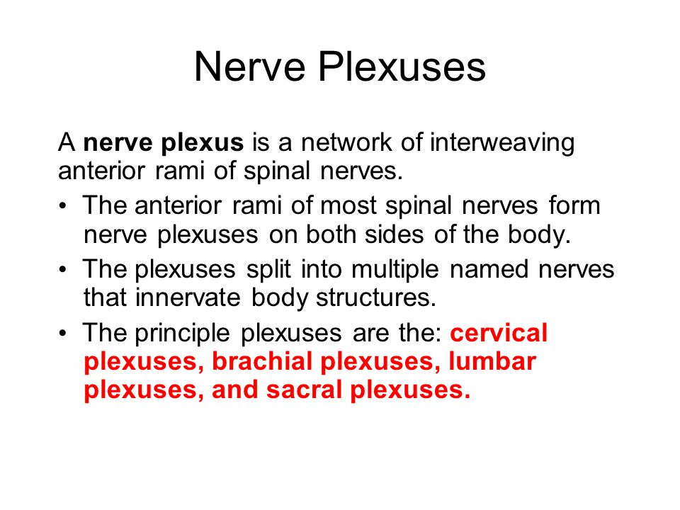 Nerve Plexuses A nerve plexus is a network of interweaving anterior rami of spinal nerves.