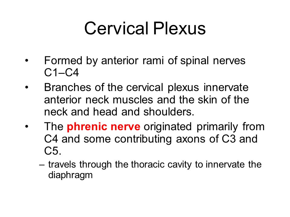 Cervical Plexus Formed by anterior rami of spinal nerves C1–C4