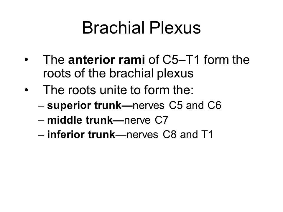 Brachial Plexus The anterior rami of C5–T1 form the roots of the brachial plexus. The roots unite to form the: