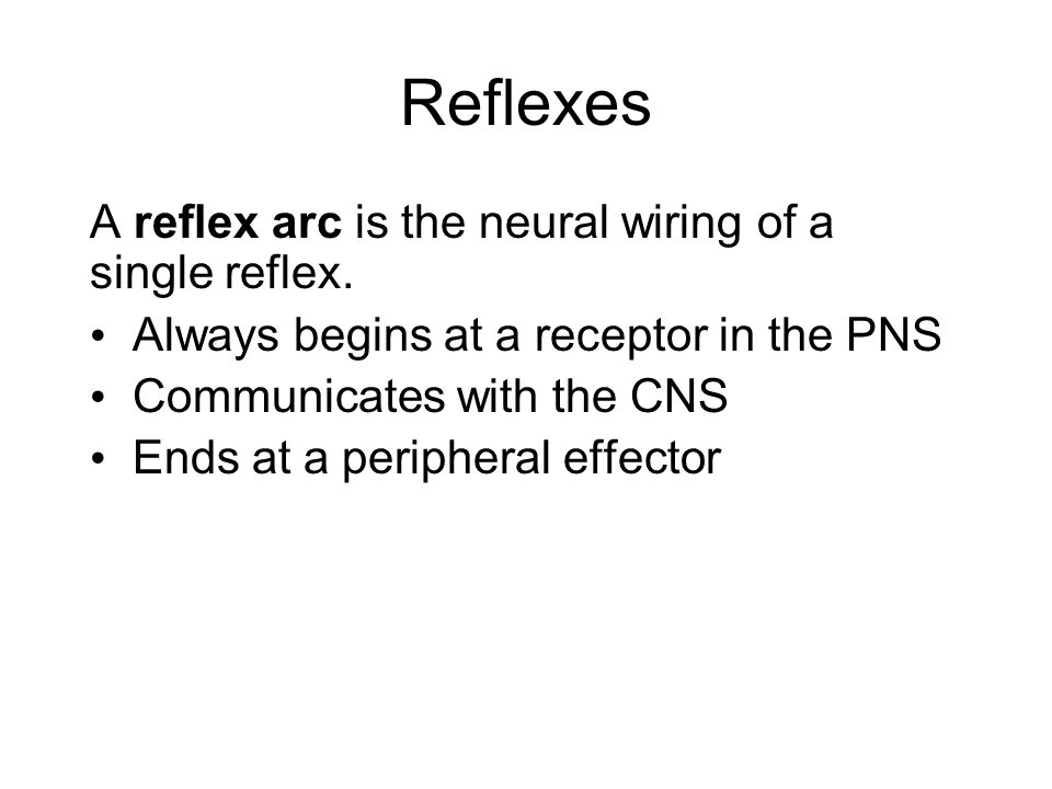 Reflexes A reflex arc is the neural wiring of a single reflex.
