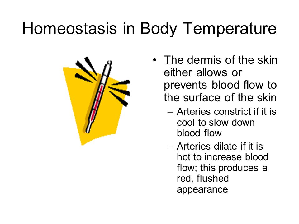 Homeostasis in Body Temperature