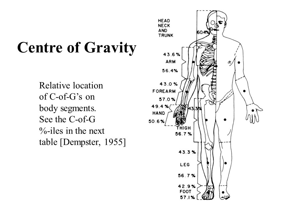 Centre of Gravity Relative location of C-of-G's on body segments.