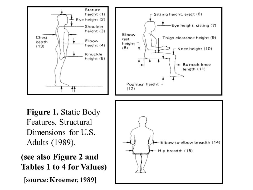 Features. Structural Dimensions for U.S. Adults (1989).