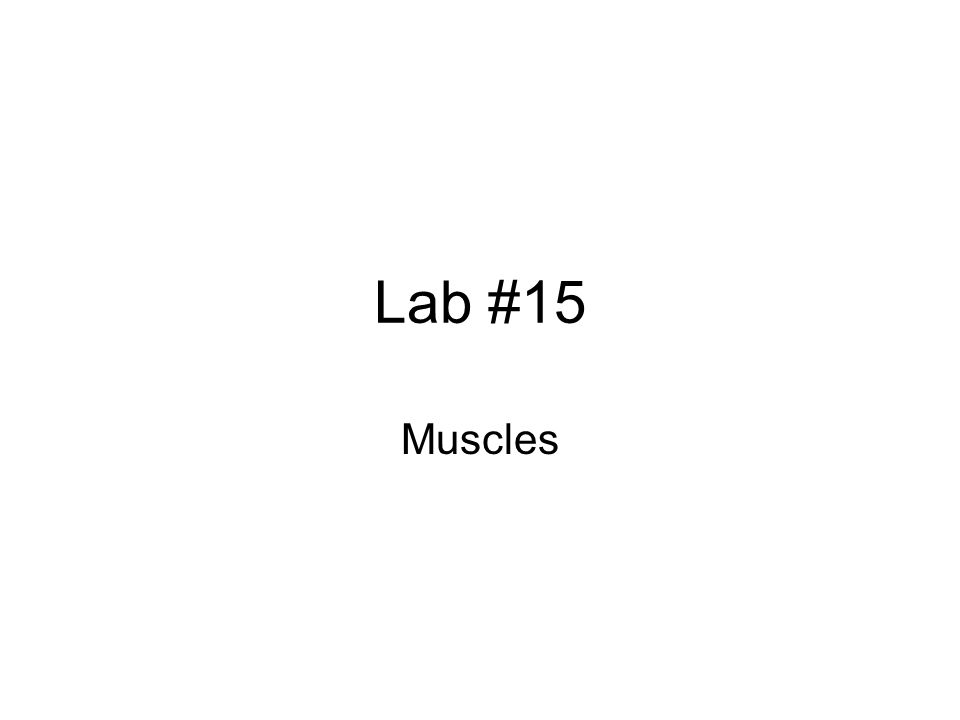 Lab #15 Muscles
