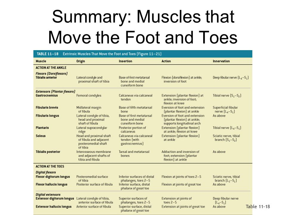 Summary: Muscles that Move the Foot and Toes