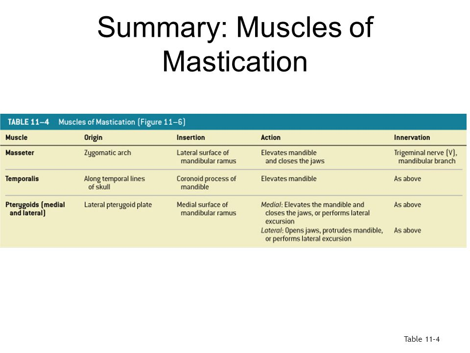 Summary: Muscles of Mastication