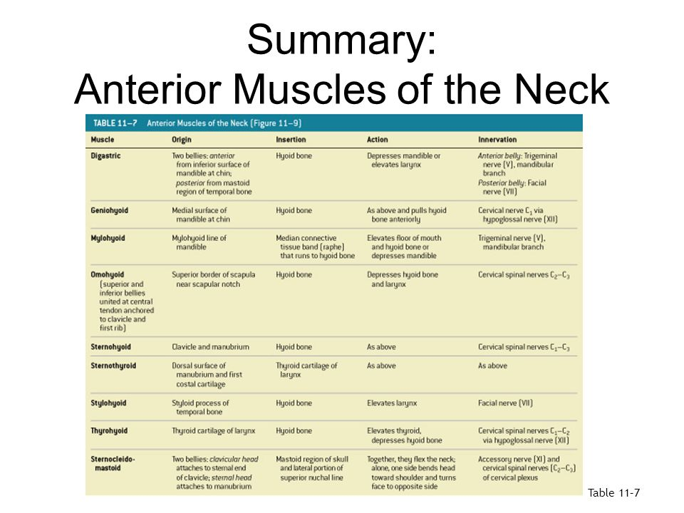 Summary: Anterior Muscles of the Neck