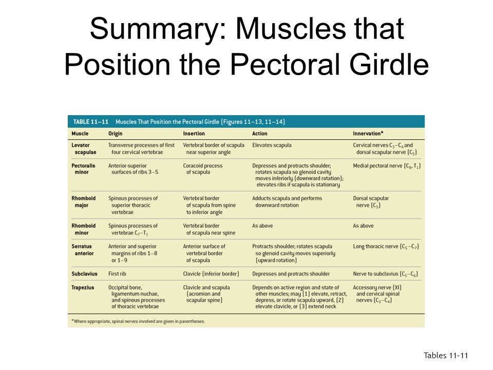 Summary: Muscles that Position the Pectoral Girdle
