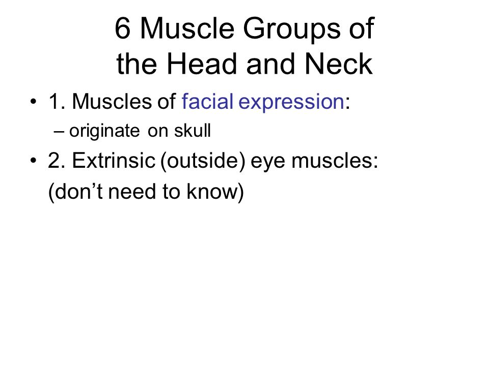 6 Muscle Groups of the Head and Neck