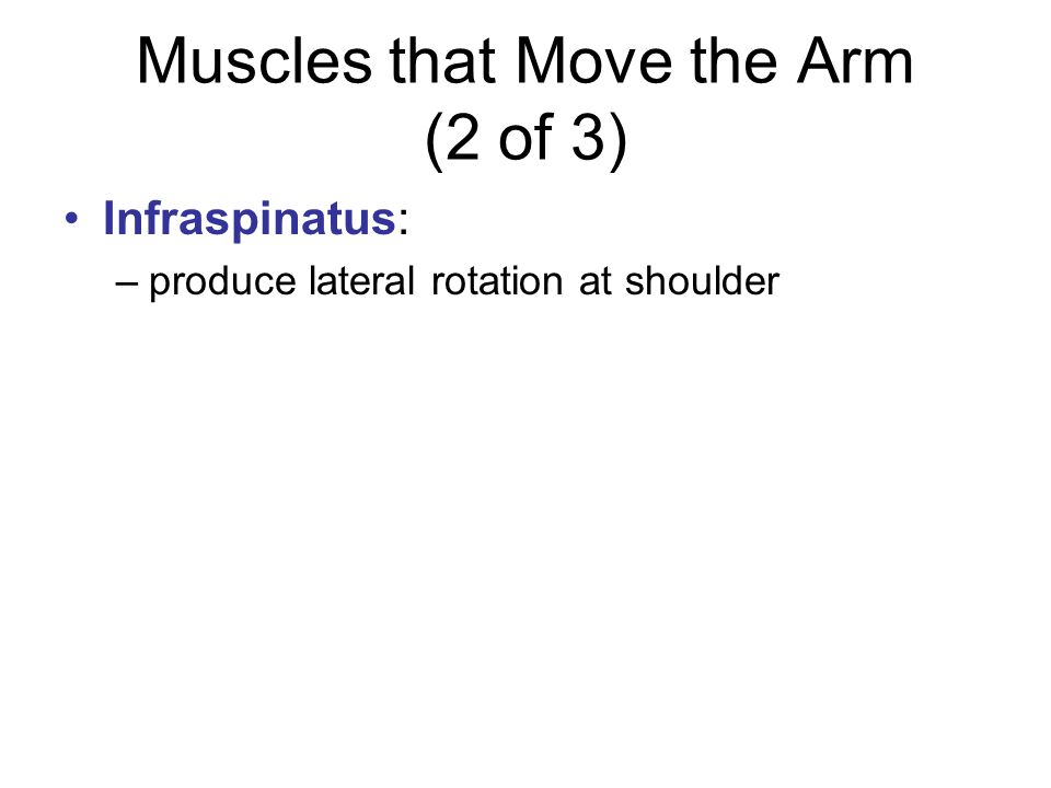 Muscles that Move the Arm (2 of 3)