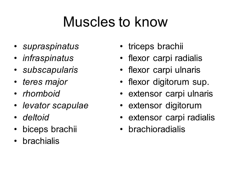 Muscles to know supraspinatus infraspinatus subscapularis teres major