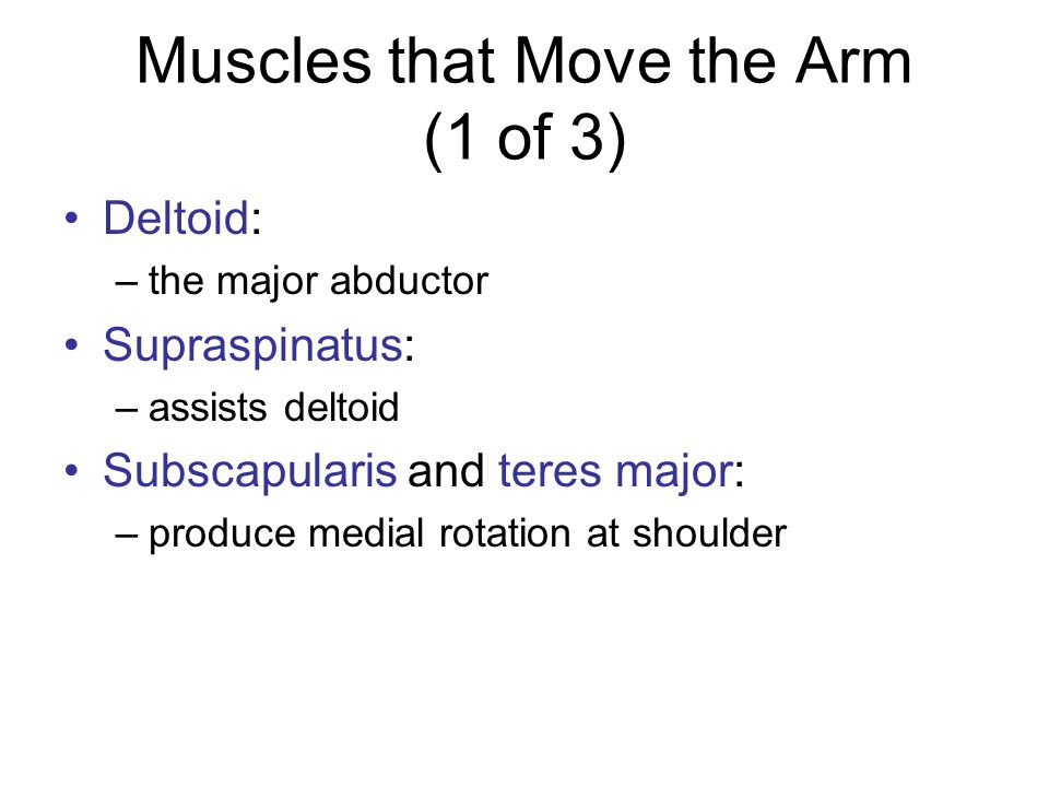 Muscles that Move the Arm (1 of 3)